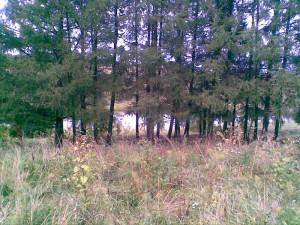 Участок земли в Нижегородской области продается.